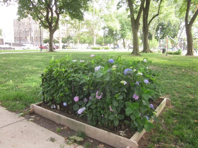 New flowering plants in the park